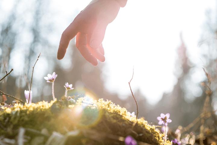 小さい花を触ろうとする手