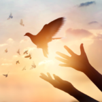 鳩を放つ女性の手
